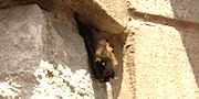 Bat in House-3, compliments of Mark Carlson