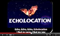 Echolocation+song+video